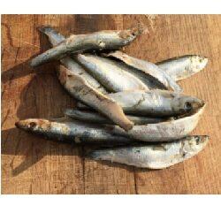 HR Fish Whole Oily (Sprats) 1kg