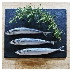 NM Mackerel Fresh Whole approx 1kg